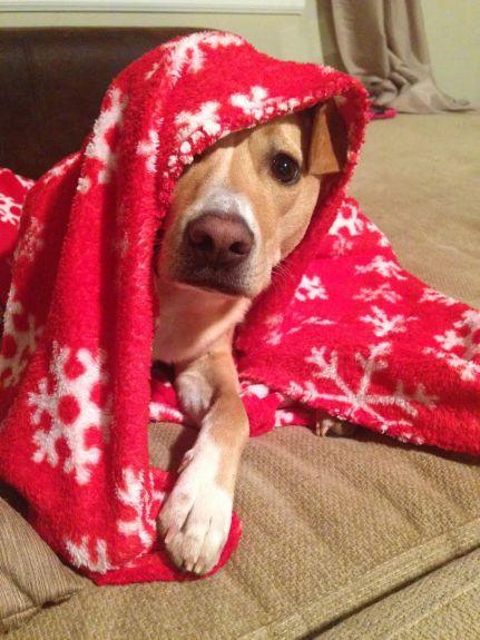 Tanner blanket