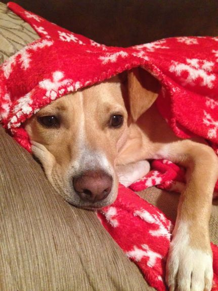 Tanner blanket 2