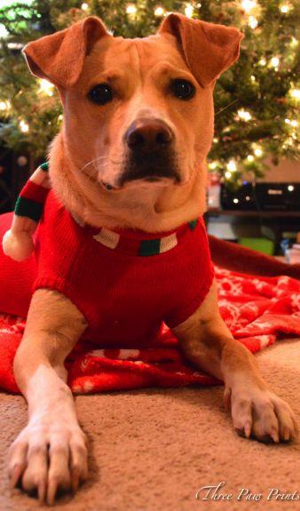 Tanner Christmas 2-1