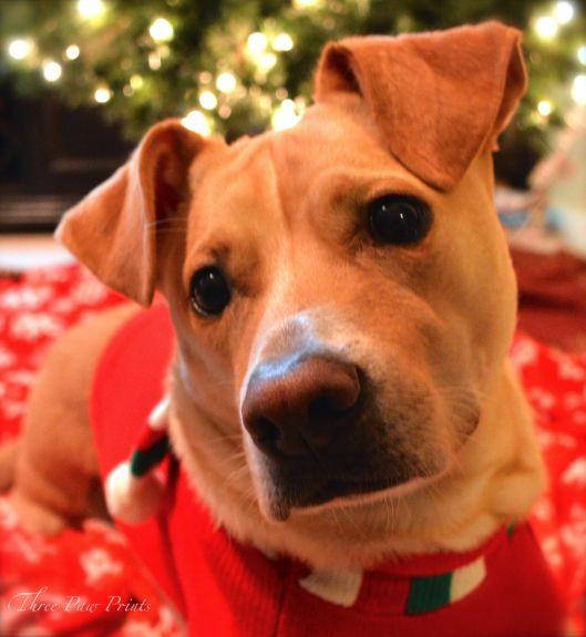 Tanner Christmas